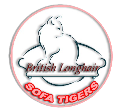 BRITISH LONGHAIR SOFA TIGERS